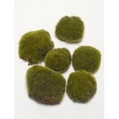 Umělý mech, zelený 6 ks